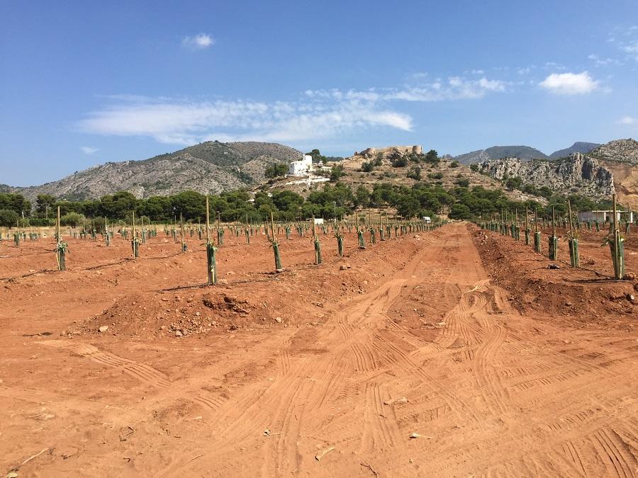 Plantación aguacates